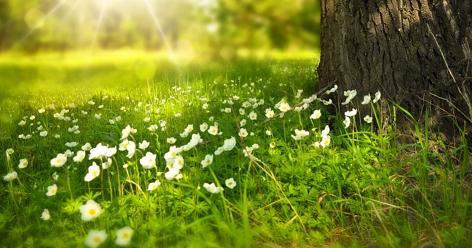 Пролетна ваканция от 17.04. до 20.04.2020 г.